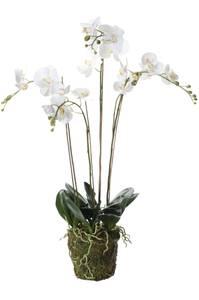 Bilde av Kunstig Orkide Hvit i Mose 90cm