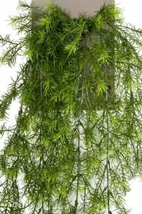 Bilde av Kunstig Asparagus 75cm
