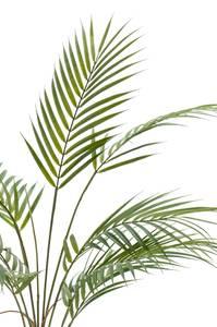 Bilde av Kunstig Chamaedorea Blader 85cm