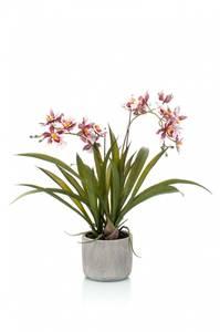 Bilde av Kunstig Oncidium Orkide Burgunder i Potte 45cm