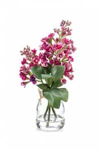Bilde av Syrinblomst Beauty i Glass 22cm