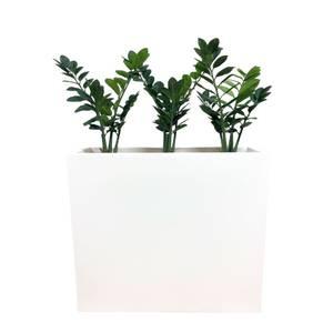 Bilde av Komplett Plantekasse - 3 stk Smaragdplanter