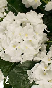 Bilde av Kunstig Hortensia Hvit UV i Potte 40cm